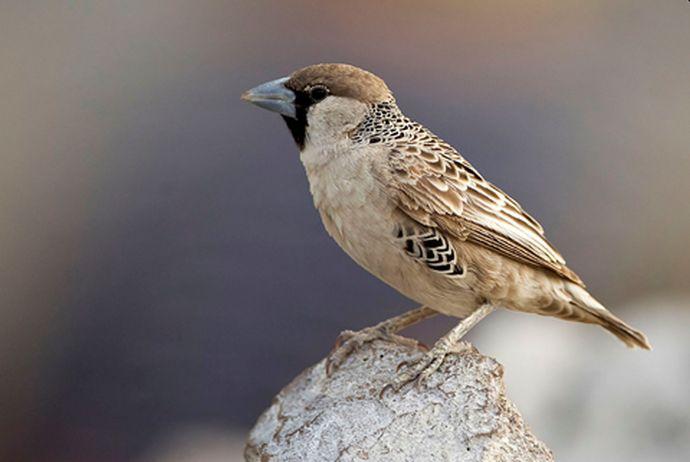ptak news